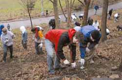 TC and Columbia clean up at Fort Tryon Park on Community Outreach Day.
