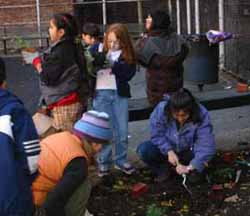 Children working in the Urban Gardening Project.