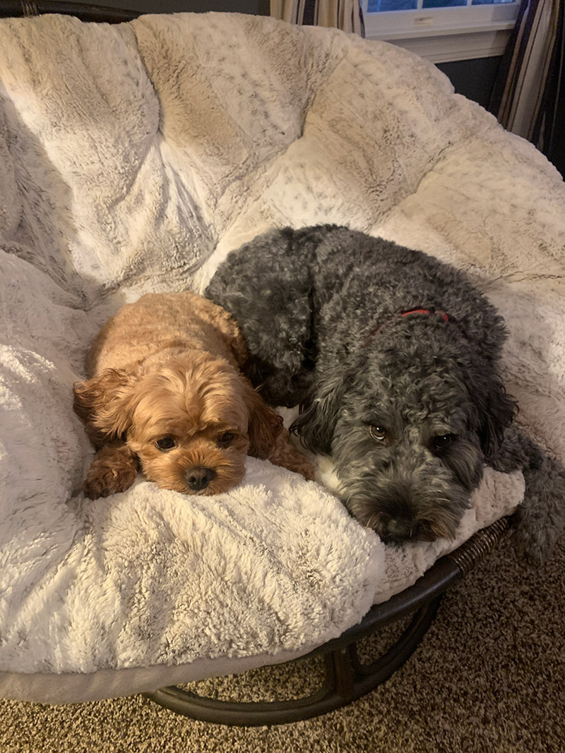 Pets - Bailey and Winston